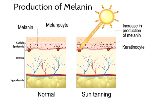 production of melanin